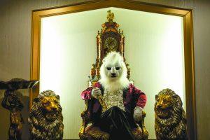 white_lion3