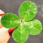 アメリカの吹奏楽ラジオ番組兼インターネット番組「Wind & Rhythm」Episode471は「Irish Blessings」